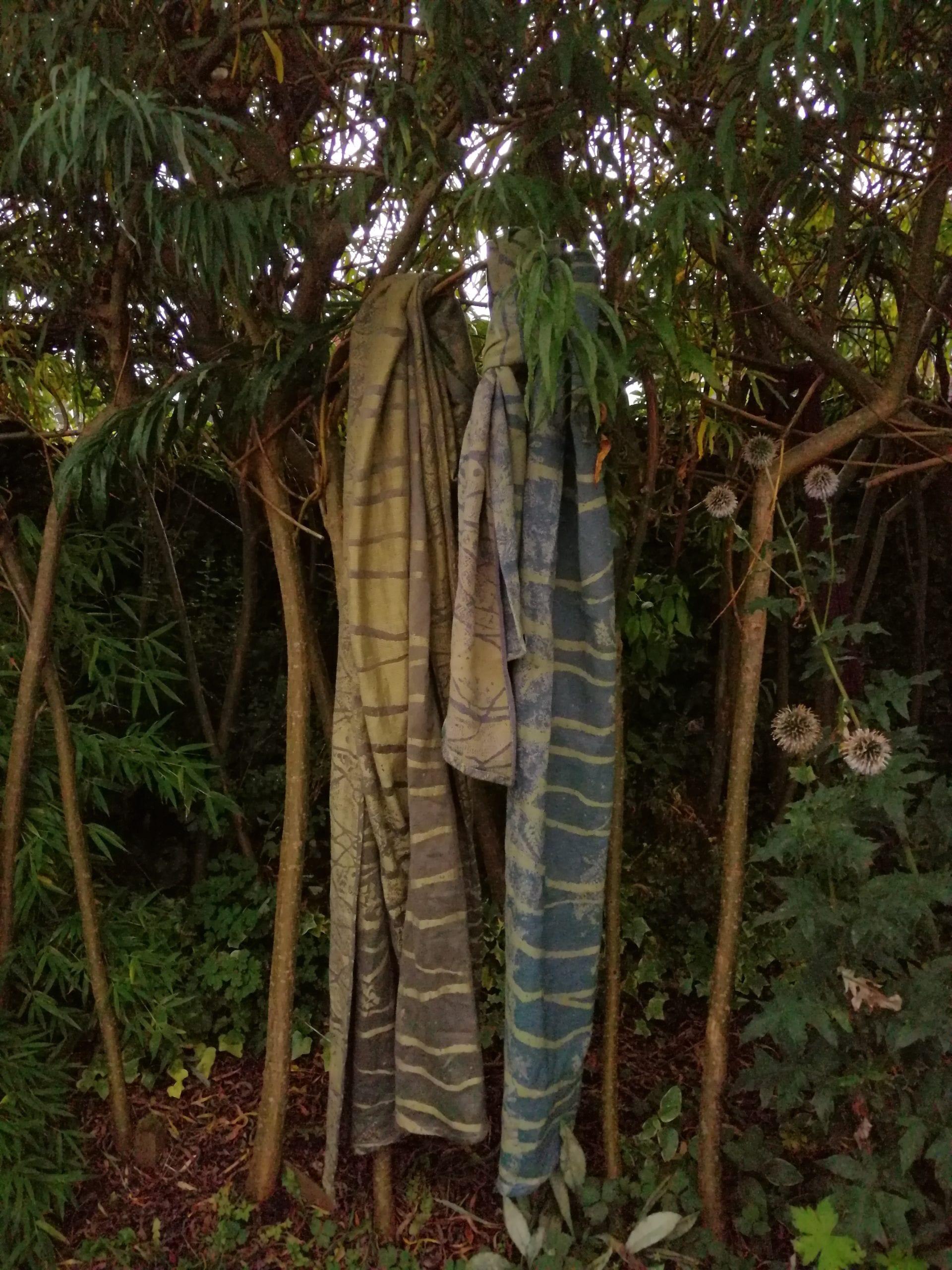 comparing 2 birch trees wraps